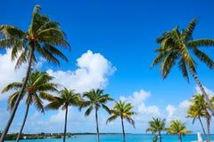 Florida stämmer palmträd i den soliga dagen Florida USA Arkivfoton
