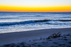Florida strand för gryning med drivved på sanden Royaltyfria Foton