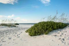 Florida strand med strandrosmarin Royaltyfria Foton