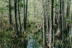 Florida-Sumpf Stockfotos