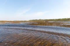 Florida-Sumpfgebiet, Airboatfahrt am Everglades-Nationalpark in USA Populärer Platz für Touristen stockbild