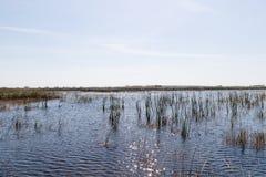 Florida-Sumpfgebiet, Airboatfahrt am Everglades-Nationalpark in USA Populärer Platz für Touristen lizenzfreie stockfotos