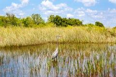 Florida-Sumpfgebiet, Airboatfahrt am Everglades-Nationalpark in USA Populärer Platz für Touristen, wilde Natur und Tiere stockbilder