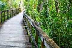Florida-Sumpfgebiet, hölzerne Wegspur am Everglades-Nationalpark in USA lizenzfreie stockbilder