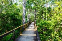 Florida-Sumpfgebiet, hölzerne Wegspur am Everglades-Nationalpark in USA stockfotografie