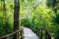 Florida-Sumpfgebiet, h?lzerne Wegspur am Everglades-Nationalpark in USA stockfotografie