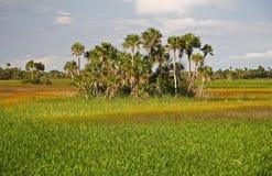 Florida-Sumpfgebiete Stockbild