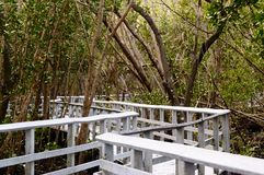 Florida-Sumpfgebiete in den Mangroven Stockfotografie