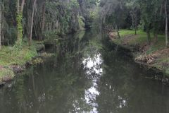Florida-Sumpfgebietstrom während des leichten Regens stockfotografie