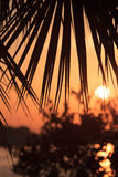 Florida sunrise through a palm frond Royalty Free Stock Photos