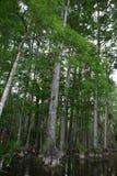 florida swamp fotografering för bildbyråer