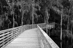 Florida swamp along the St Johns River. Black and white image of a Florida swamp along the St Johns river in Jacksonville stock image