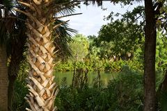 Florida swamp landscape stock photo