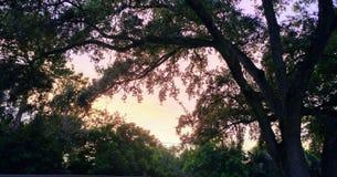 Florida sydvästlig solnedgångsikt, stränder Royaltyfria Foton