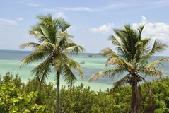 Florida tangenter Arkivbild