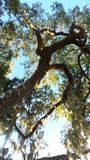 Florida träd Royaltyfria Foton