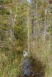 Florida Trail Stock Photo
