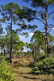 The Florida Trail Stock Image