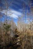 Florida Trail in Big Cypress Royalty Free Stock Photo