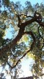 Florida tree royalty free stock photos