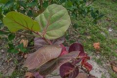 Florida Vegetation3 litoral Imagem de Stock Royalty Free