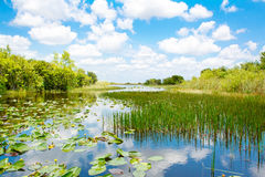 Florida wetland, Airboat ride at Everglades National Park in USA. Stock Photography