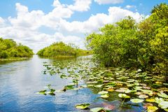 Florida wetland, Airboat ride at Everglades National Park in USA. Popular place for tourists, wild nature and animals stock photo