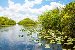 Florida wetland, Airboat ride at Everglades National Park in USA. Royalty Free Stock Image