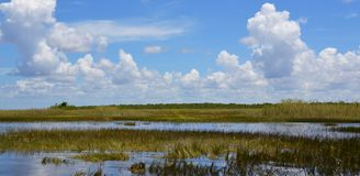 Florida wetland. Everglades National Park in Florida, USA. Florida wetland at summer. Everglades National Park in Florida state, USA stock photography
