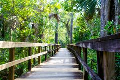 Florida wetland, wooden path trail at Everglades National Park in USA. Popular place for tourists, wild nature and animals stock photo
