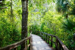 Florida wetland, wooden path trail at Everglades National Park in USA. Royalty Free Stock Photo