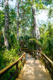 Florida wetland, wooden path trail at Everglades National Park in USA. Popular place for tourists, wild nature and animals royalty free stock images