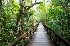 Florida wetland, wooden path trail at Everglades National Park in USA. Popular place for tourists, wild nature and animals stock image