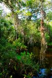 Florida wetland, wooden path trail at Everglades National Park in USA. Popular place for tourists, wild nature and animals royalty free stock photography