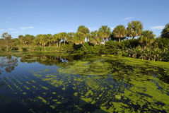 The Florida Wetlands Royalty Free Stock Images