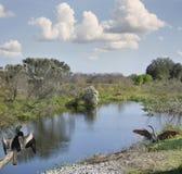 Florida Wetlands Royalty Free Stock Photo