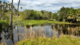 Florida Wetlands landscape Royalty Free Stock Photography