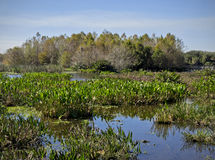 Florida Wetlands. Lush Florida wetlands are on display at the Green Cay Nature Center in the southern Palm Beach County town of Boynton Beach royalty free stock images
