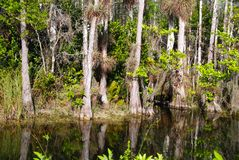 Florida wetlands. Swamp with mangrove trees in Everglades National Park stock photography
