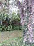 Florida wildlife Royalty Free Stock Image