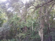 Florida wildlife Royalty Free Stock Photography