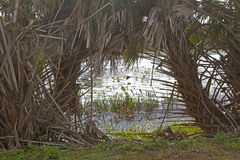 Florida Woods and Wetlands Royalty Free Stock Image