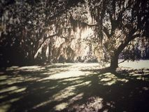 Floridas森林 库存图片