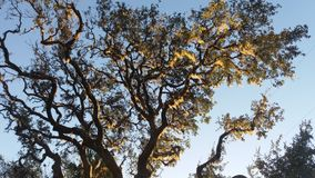 Floridas Schönheit Stockbilder