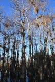 Floridian Everglades Stock Image