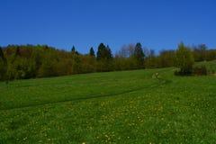 Floriferous meadow Stock Photo