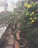 Floripa ufsc universidade ομοσπονδιακό de santa Catarina Στοκ φωτογραφία με δικαίωμα ελεύθερης χρήσης