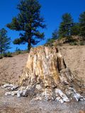 Florissant Fossil Beds Stock Image
