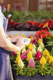 Florist Stock Image