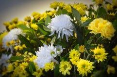 florist Fotografia de Stock